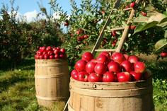 hudson river fall foliage cruises:1-Day Hudson River Valley Apple Picking