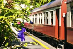 united states train trips:One-Day Tour to Kuranda