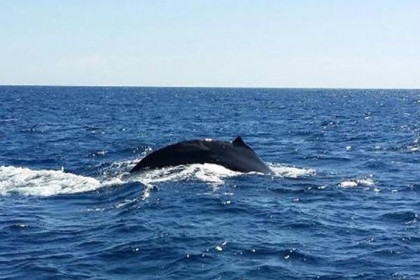 Whale Watching on West Oahu Coast