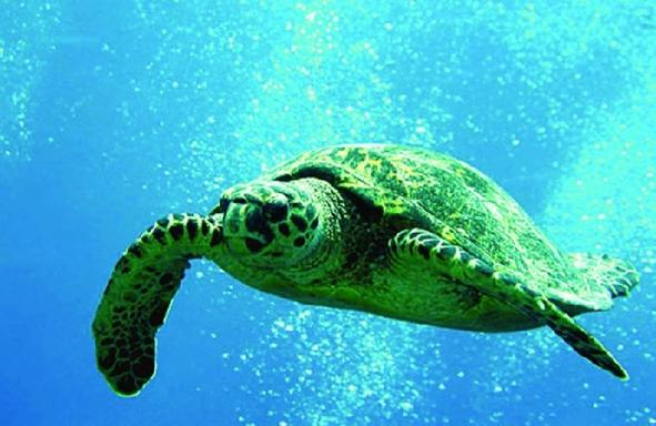 3 Hours Snorkel and Sail with Sea Turtles Guaranteed