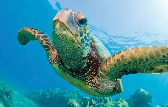 2 Hours Snorkel and Sail with Sea Turtles Guaranteed