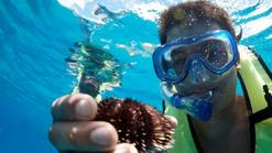 europe tours december 2014:Hilton Turtle Snorkel and Sail with Lunch
