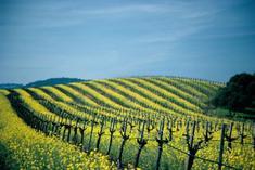 wine tours napa:Wine Country Tour