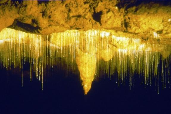 Natural Bridge Glow Worm Night Tour