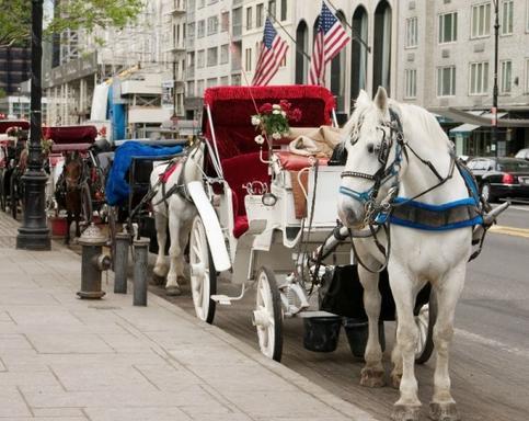 Central Park Carriage Rides Tour