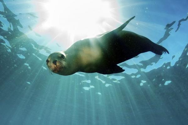 Oahu – Sea Life Park