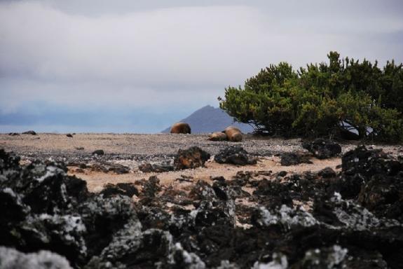 6-Day Galapagos Adventure: Santa Cruz - Isabela