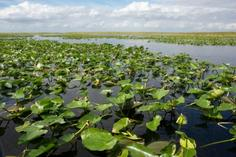 everglade airboat:Miami Everglades Airboat Adventure with Transportation
