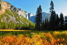 bus tours from montreal to new york:Yosemite Day Trip