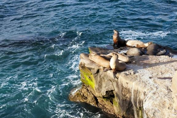 Two-Hour San Diego Full Bay Cruise & Sea Lion Adventure