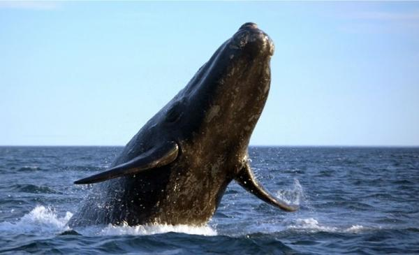 4-Hour San Diego Whale Watching Adventure