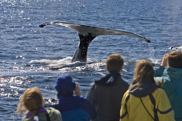 4-Hour San Diego Whale Watching Adventure