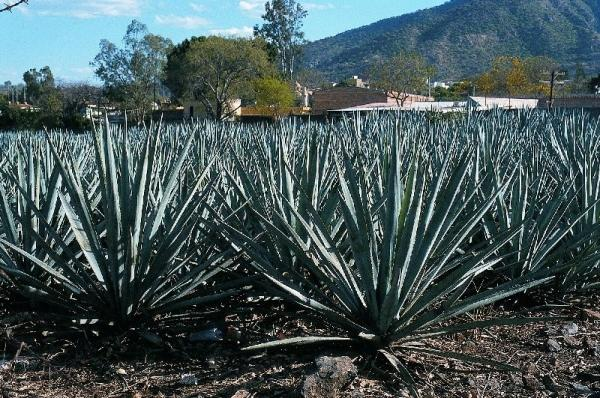 7-Day Mexico Tequila Country & Sunny Pacific Tour