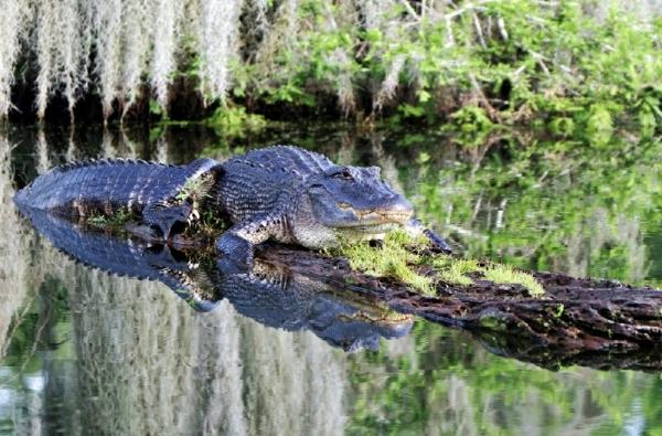 Airboat Adventure on the Bayou
