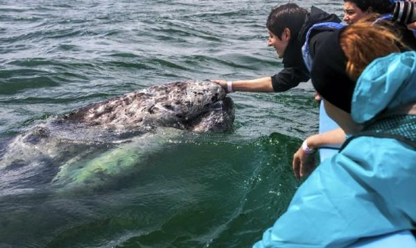 12-Hour Whale Watching Excursion