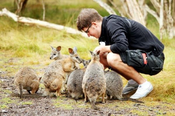 1-Day Phillip Island Penguin Parade Tour