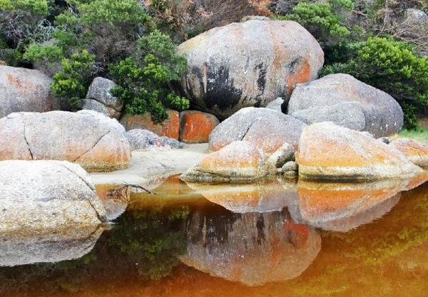 1-Day Wilsons Promontory Tour