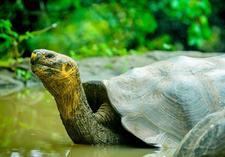 tour galapagos:Cruising The Galapagos On The Galapagos Legend