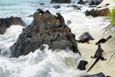 hollywood walk of fame star:Cruising The Galapagos On The Galapagos Sea Star Journey With Ecuador's Amazon