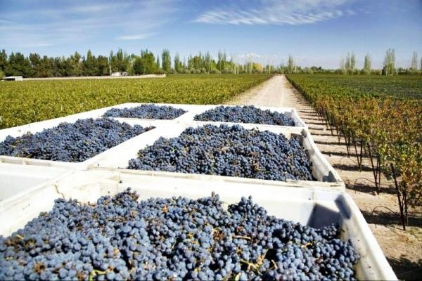 Mendoza Wine Country Tour