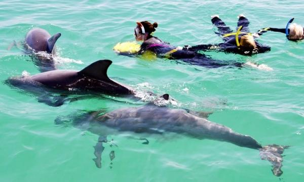 Swim with Wild Dolphins