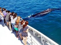 maid mist boat ride:2-Hour Whale Watching Tour