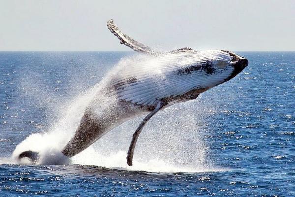 2-Hour Whale Watching & Aquarium Tour
