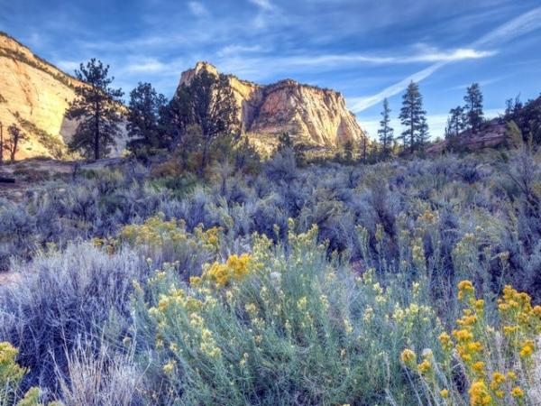 Zion National Park Private Fully Customizable Group Tour