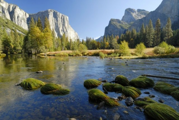 Yosemite National Park 1-Day Tour