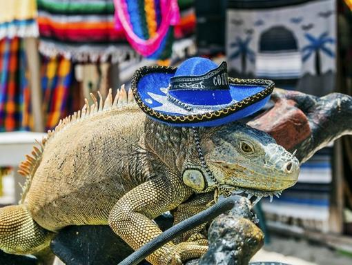 Full-Day Excursion to Cozumel