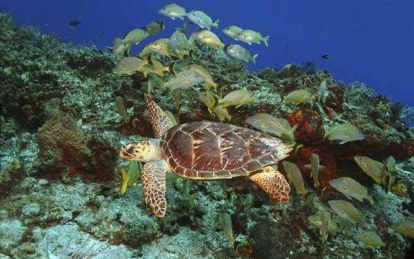 12-Hour Snorkeling Tour With Turtles in Akumal