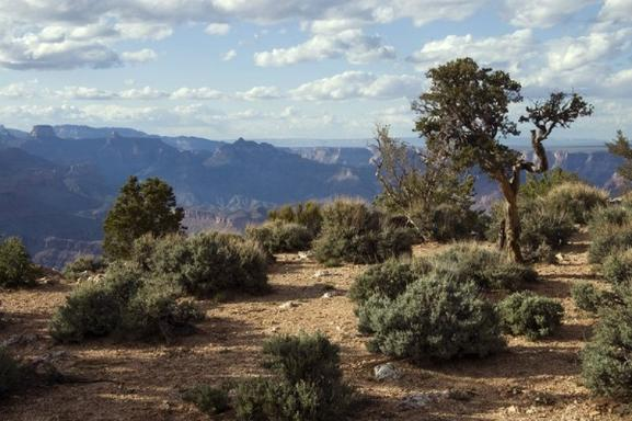 1-Day Railroad Excursion to Grand Canyon from Flagstaff