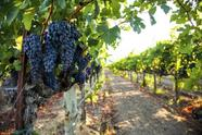 1-Day Redwoods and Wine Country Tour