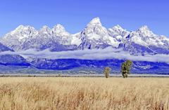 chicago 1 day tour:Grand Teton National Park Half Day Tour