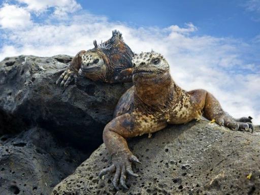 6-Day Galapagos Island Tour