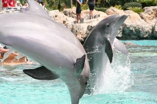 5-Day Universal Studios, Islands of Adventure, SeaWorld, Busch Gardens & Aquatica From Miami