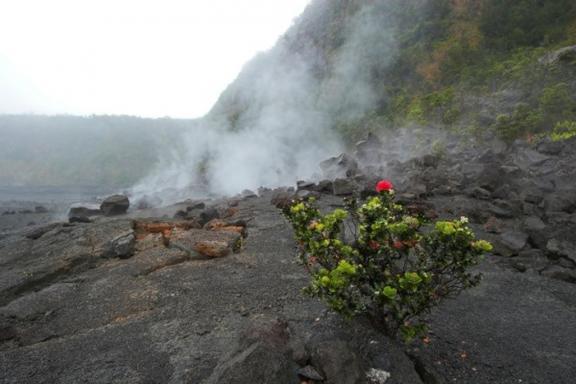 Big Island Volcano Adventure Tour