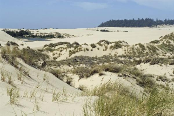 3-Day Portland Luxury Tour: Columbia River Gorge, Florence Coast and Woodburn Outlets