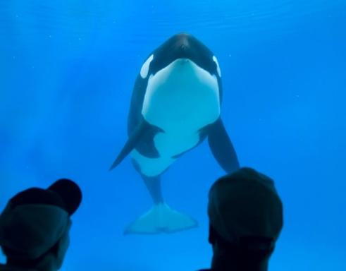1-Day San Diego SeaWorld Tour