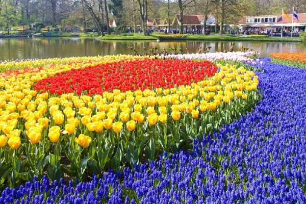 Holland & Belgium With Tulips In Early Spring - Northbound