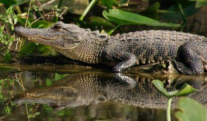 2-Day Everglades Park, Sanibel Island & Outlet Shopping Tour from Miami