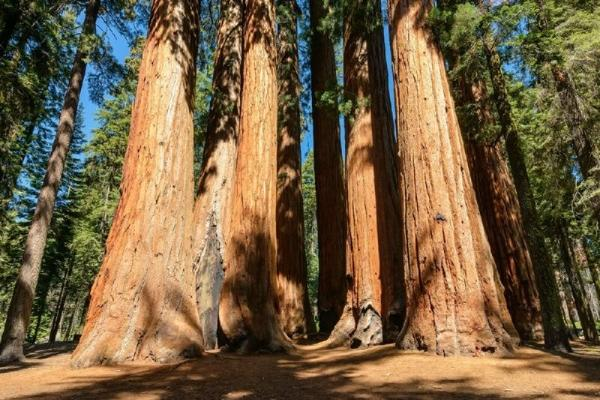 5-Day Seattle, Portland and San Francisco Tour: Drive Through Tree Park and Neptune State Park
