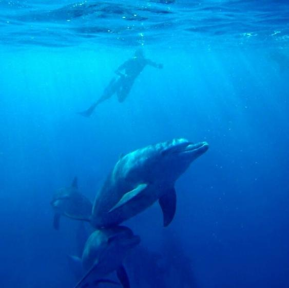 Oahu Wild Dolphin Adventure Tour
