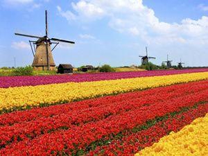 Amsterdam City Tour + Keukenhof Flower Garden