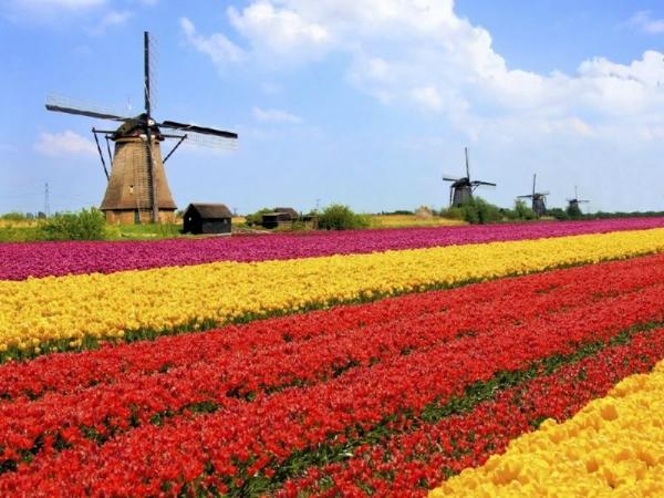 Amsterdam Flowerfields and Keukenhof Tour**Mar 22 - May 13, 2018**
