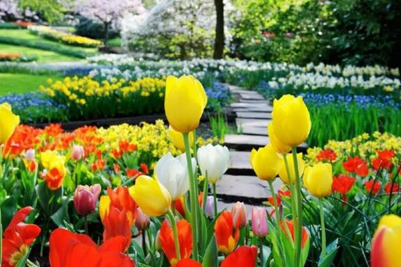 Amsterdam Flowerfields and Keukenhof Tour