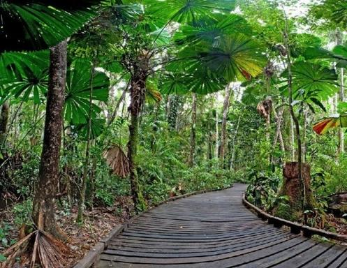 Cairns Day into Night Tour: Paronella Park - Mamu Skywalk - Josephine Falls