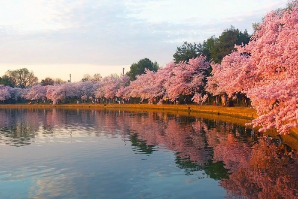 i don t understand but can you just please give me a rate on a 7 days cruise to mexico and other caribbean on carnival cruise:1-Day D.C. Cherry Blossoms Tour from New York City