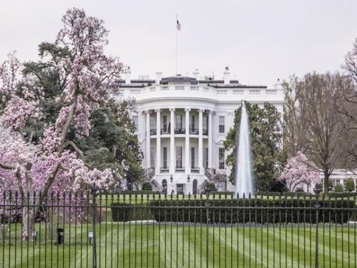1-Day D.C. Cherry Blossoms Tour from New York City