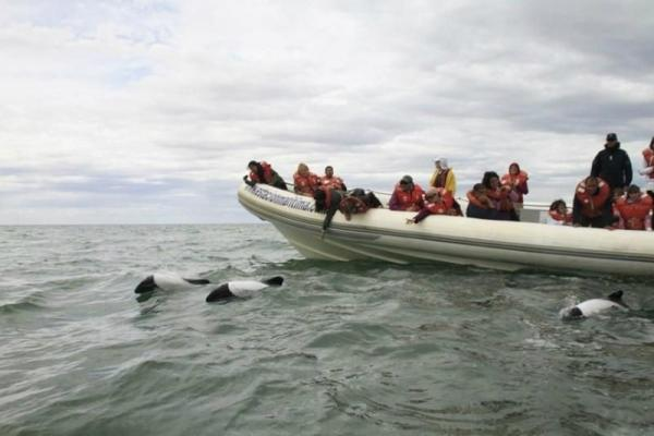 Tombo Tour From Puerto Madryn